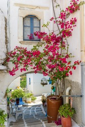 Picturesque alley in lefkes Paros greek island with a full blooming bougainvillea !! Whitewashed traditional houses with blue door  and flowers all over !!!
