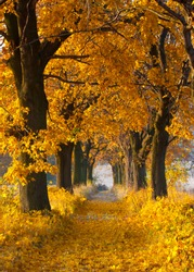 Picturesque autumn alley