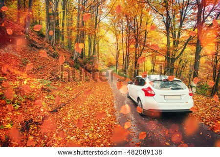 Picturesque autumn forest landscape on a sunny day. Cars on the road. Ukraine. Europe #482089138