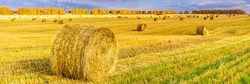 Picturesque autumn landscape with beveled field and straw bales in cloudy day. Beautiful agriculture background, wonderful nature, rustic life concept. Panoramic view, banner, wide format