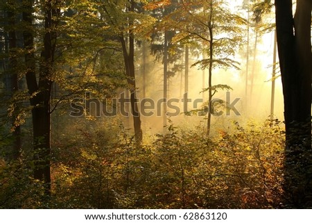 Picturesque autumnal forest on the slope in a nature reserve backlit by the rising sun.