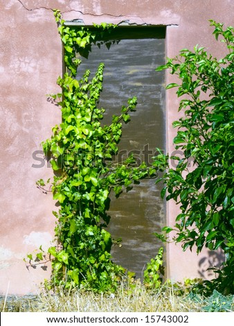 picturesque door of a home covered by ivy