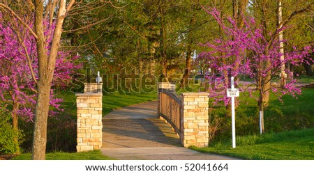 Picturesque footbridge framed by flowering jacaranda trees in the warm light of evening