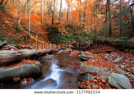 picturesque gold autumn dawn image, fast stream flowing between green stones and leaves on background autumn forest in sunlight morning sunrise, amazing nature landscape, Carpathians, Europe mountains