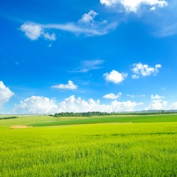 Picturesque green field and blue sky. Agricultural landscape.