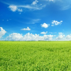 Picturesque green field and blue sky with light clouds. Agricultural landscape.