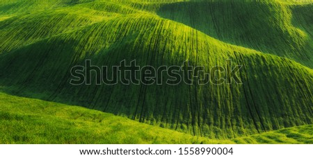 picturesque hilly field. agricultural field