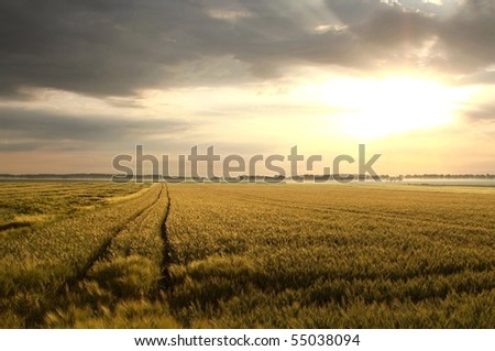 Picturesque landscape at sunrise over a field of grain.