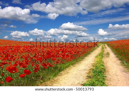 Picturesque  landscape with walkway on the poppies plantation