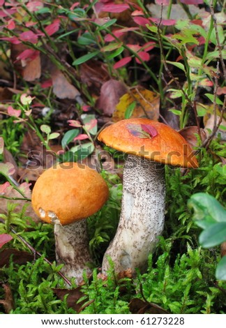 Picturesque mushrooms in forest