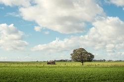 Picturesque Normandy pasture with white clouds and blue sky near lyons la foret, eure, France