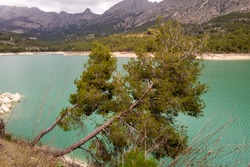 Picturesque pines, on the Guadalest de Alicante reservoir (Spain), with a Mediterranean forest environment, on a cloudy day.