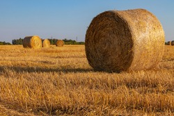 Picturesque rolls of golden straw are spread out on the mown field
