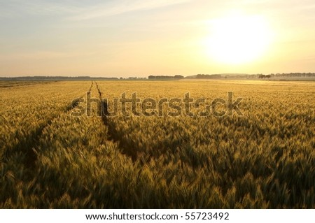 Picturesque rural landscape with dirt road leading toward the horizon.