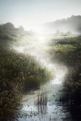 Picturesque scenery of a small river (bog) near the forest at sunrise. Morning fog, haze, sunbeams. Early autumn. Atmospheric landscape. Idyllic rural scene. Pure nature, ecology, environment