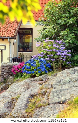Picturesque small garden in backstreet in Denmark with blue and pink hydrangea on rocks. Bornholm, Gudhjem.