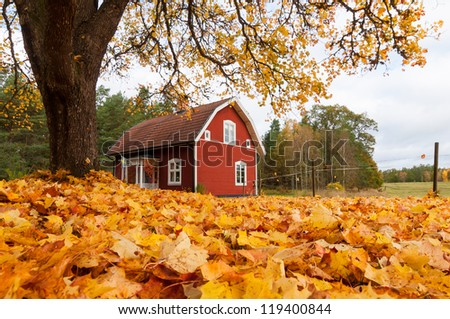 Picturesque traditional red Swedish house amongst a carpet of yellow orange autumn leaves in a peaceful country landscape