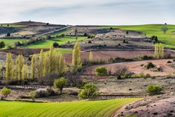 Picturesque view of idyllic farmland fields in Castile and Leon region, Spain. View at spring, before sunset.