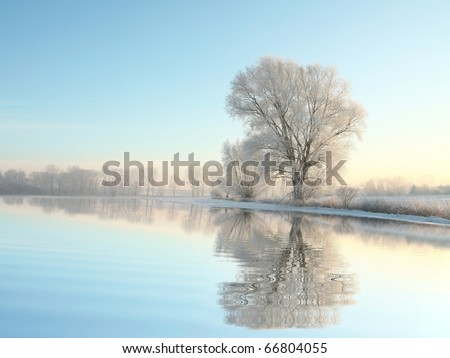 Picturesque winter landscape of frozen trees illuminated by the rising sun.