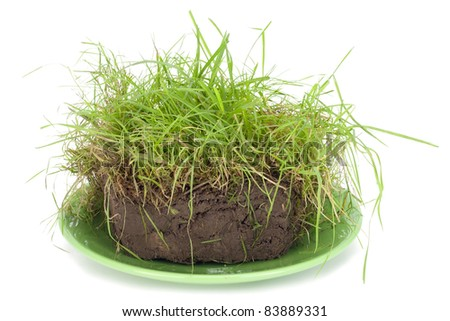 Piece of a pie from turf, compost with a green grass lies on a plate