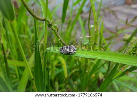 Piece of concrete lying on a blade of grass. s Zdjęcia stock ©