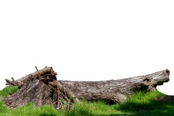 Piece of log wood in the nature forest on green grass, it gets discarded when wilted. Creative template layout with nature concept. With clipping path.