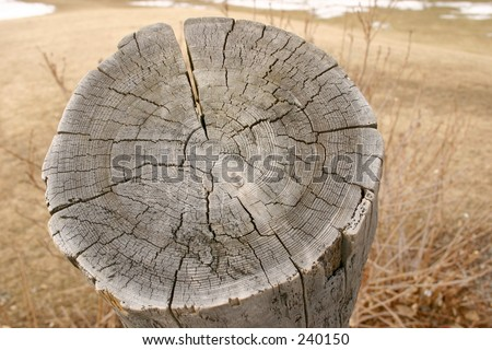 piece of tree trunk stock photo 240150 shutterstock