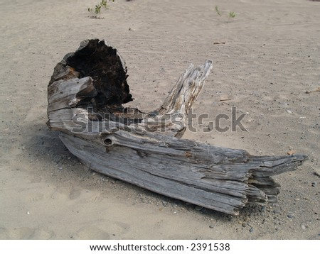piece of wood on a sand beach