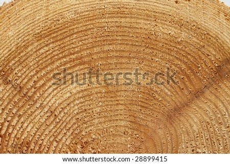 piece of wood on white