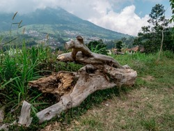 pieces of dry and large tree wood that are placed in the garden as decoration with a mountains background