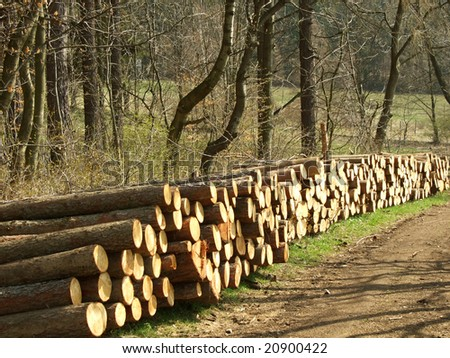 pieces of wood along the road