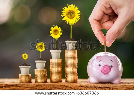 Pig bank and stacking gold coins and sunflower with growing in the public park, a saving for future business investment and richness concept. #636607366