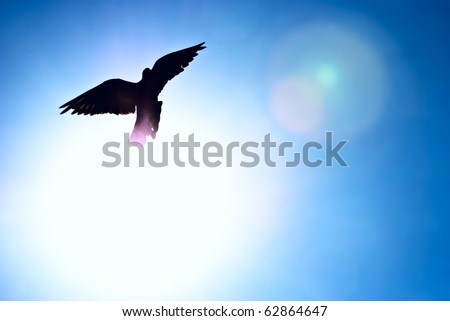 Pigeon against the blue sky and a shining sun