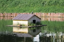 Pigeon and duck on a floating wooden duck house with a metal roof on a small pond. A bird house is reflected in the green water of the pond. Caring for birds in city parks.