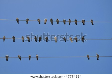 Pigeon birds resting on a wire - stock photo