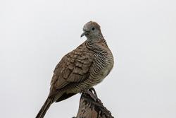 Pigeon dove bird stand on tree perch