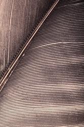 pigeon feather closeup
