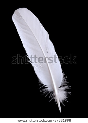 pigeon feather  on the black background #57881998