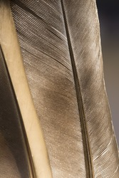 Pigeon feathers texture