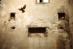 Pigeon flying, an old brown wall.
