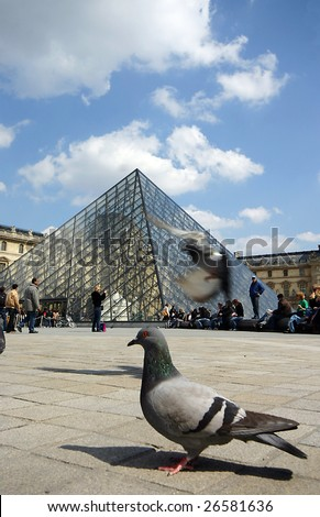 Pigeon flying over Louvre museum