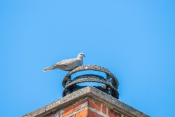 Pigeon on a bricked chimney in blue sky