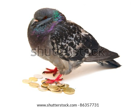 Pigeon on coins