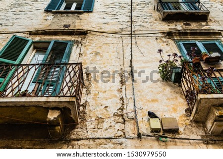 Pigeon perched on the wall of an old abandoned house in an Italian city.