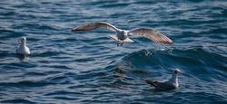 pigeon seagull bird sparrow sea