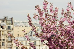 Pigeon sitting on blooming tree on city background