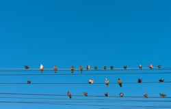 pigeon sitting on power lines over clear sky.