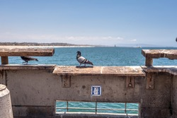 pigeon walking on a pier railing on a sunny ocean background