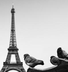 Pigeons against Eiffel tower - Paris France