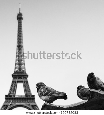 Pigeons against Eiffel tower - Paris France